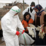 Picture of culling infected poultry in Turkey