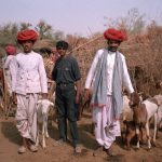 Raika men showing sheep and goat